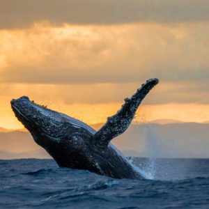 whale watching- punta cana private tours